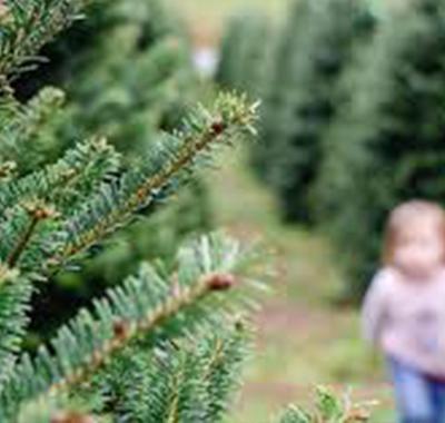 Choose-N-Cut Christmas Trees
